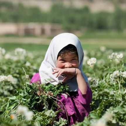 small girl weeding a potato field on the silk road