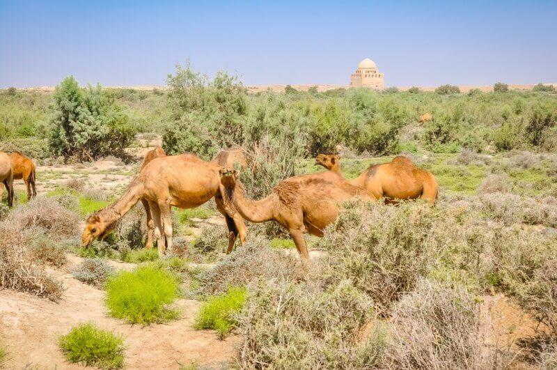 Turkmenistan-Desert